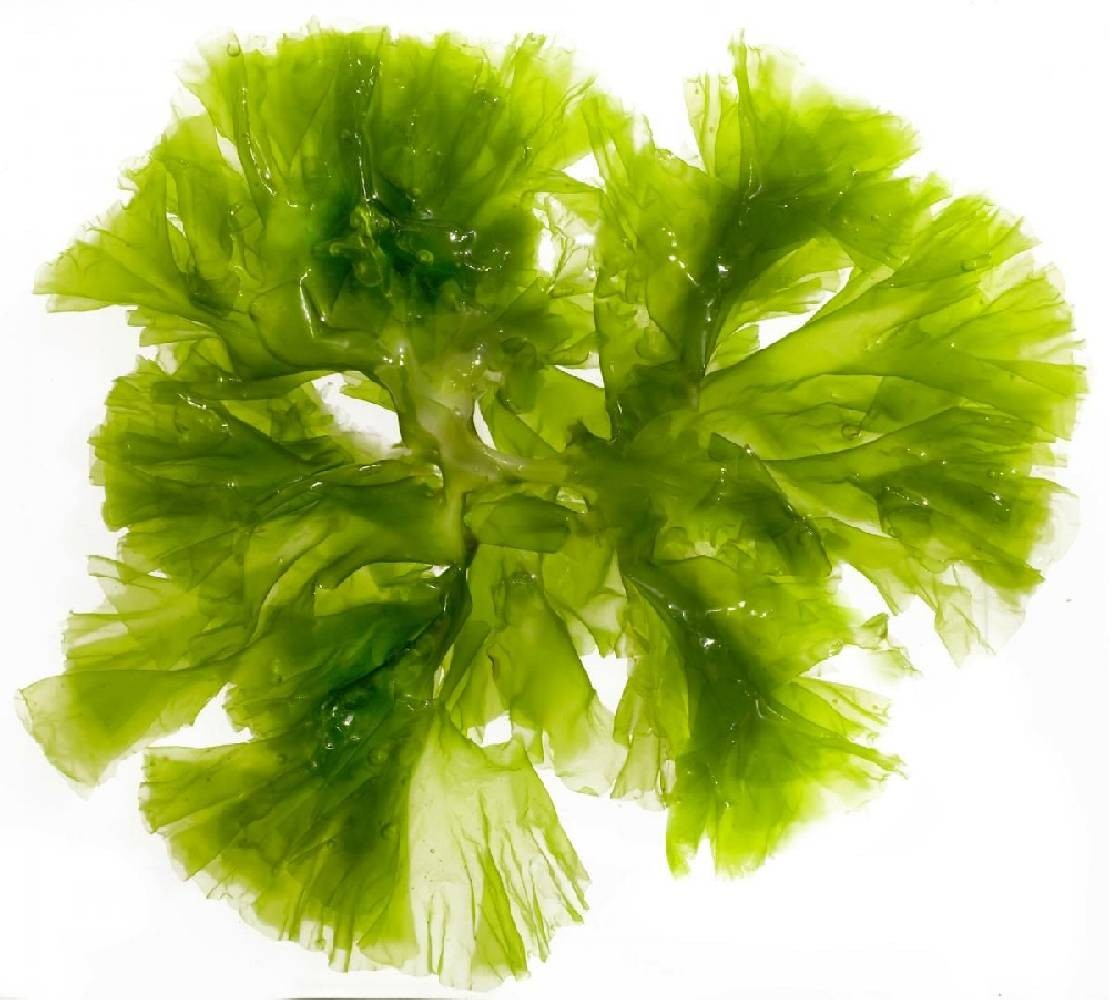image de l'ingredient Chlorella