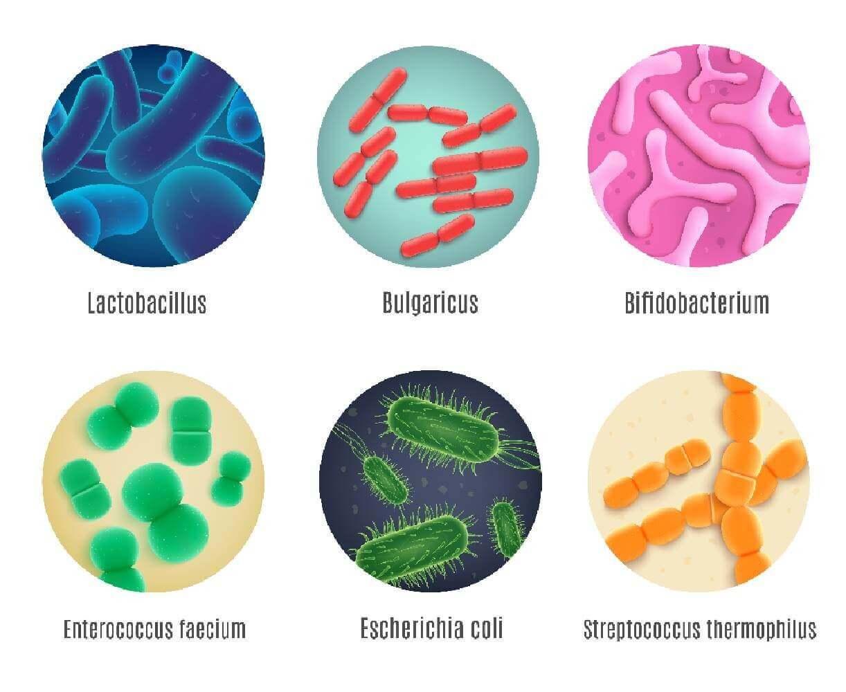image de l'ingredient Ferments lactiques