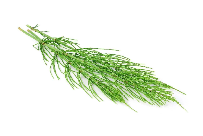image de l'ingredient Prêle