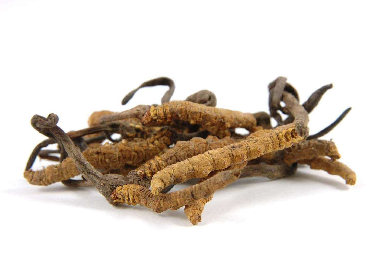 image de l'ingredient Cordyceps
