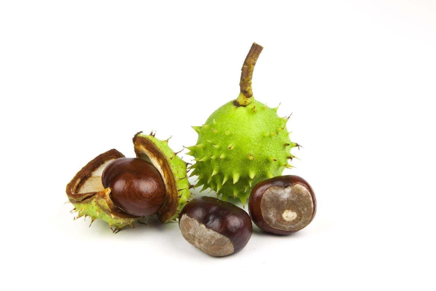 image de l'ingredient Marronnier d'inde