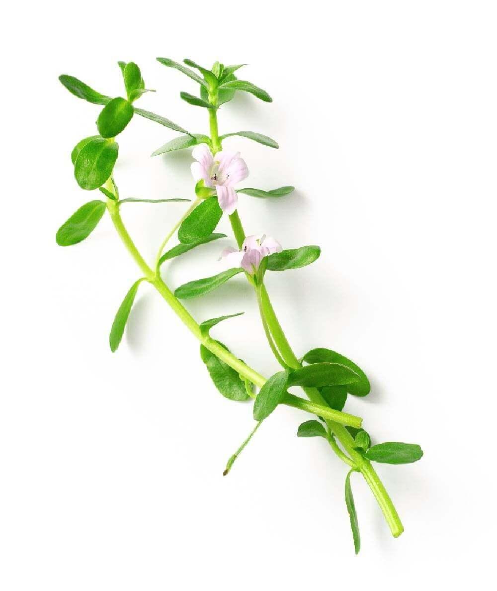 image de l'ingredient Bacopa- Brahmi