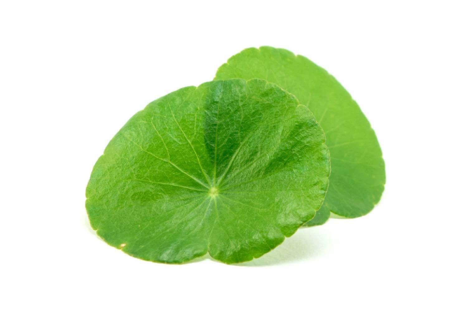 image de l'ingredient Centella