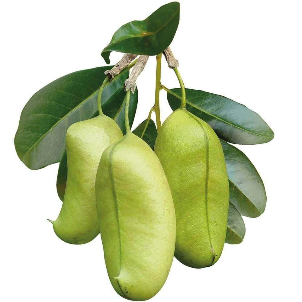 image de l'ingredient Griffonia