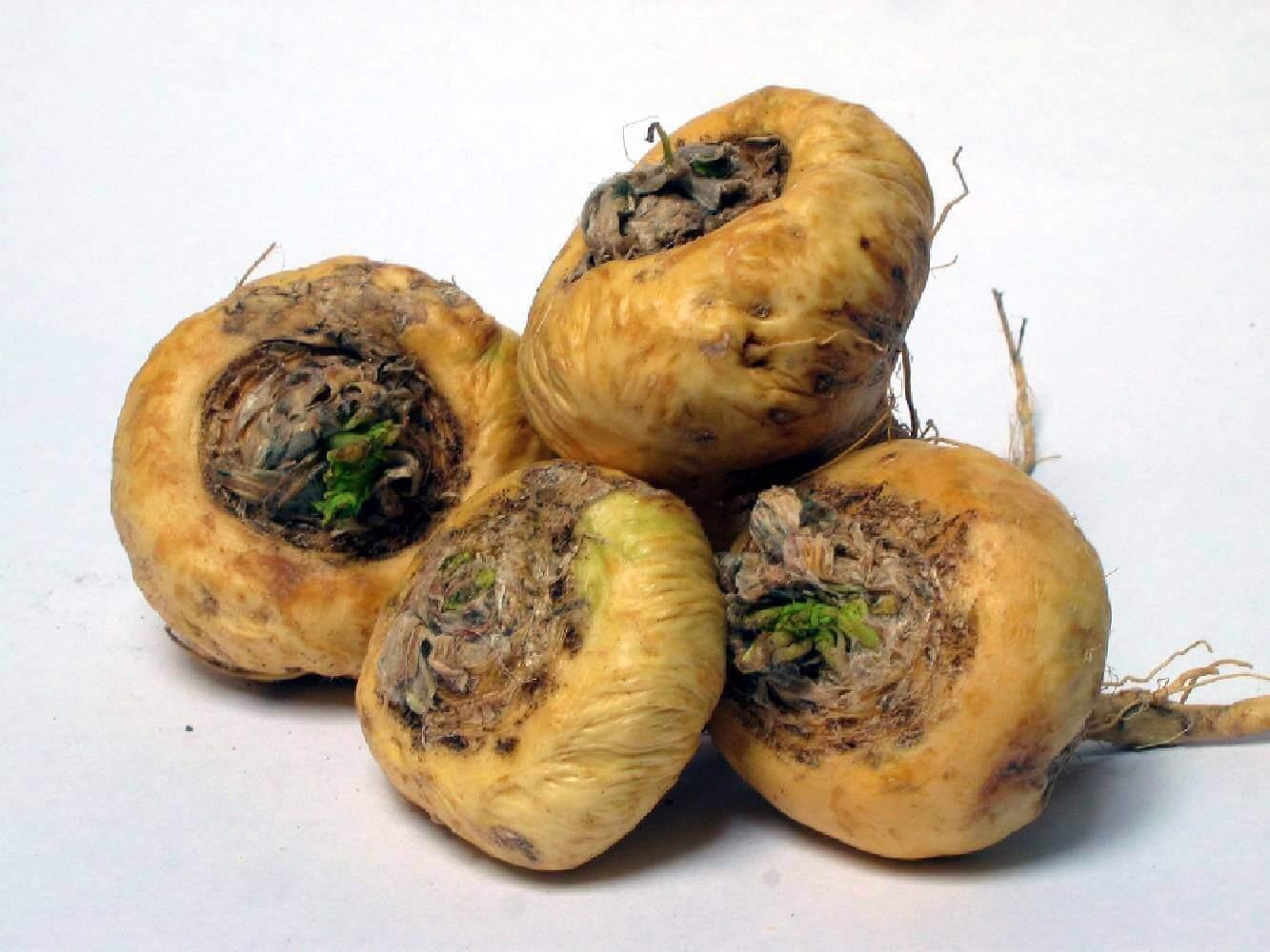image de l'ingredient Maca