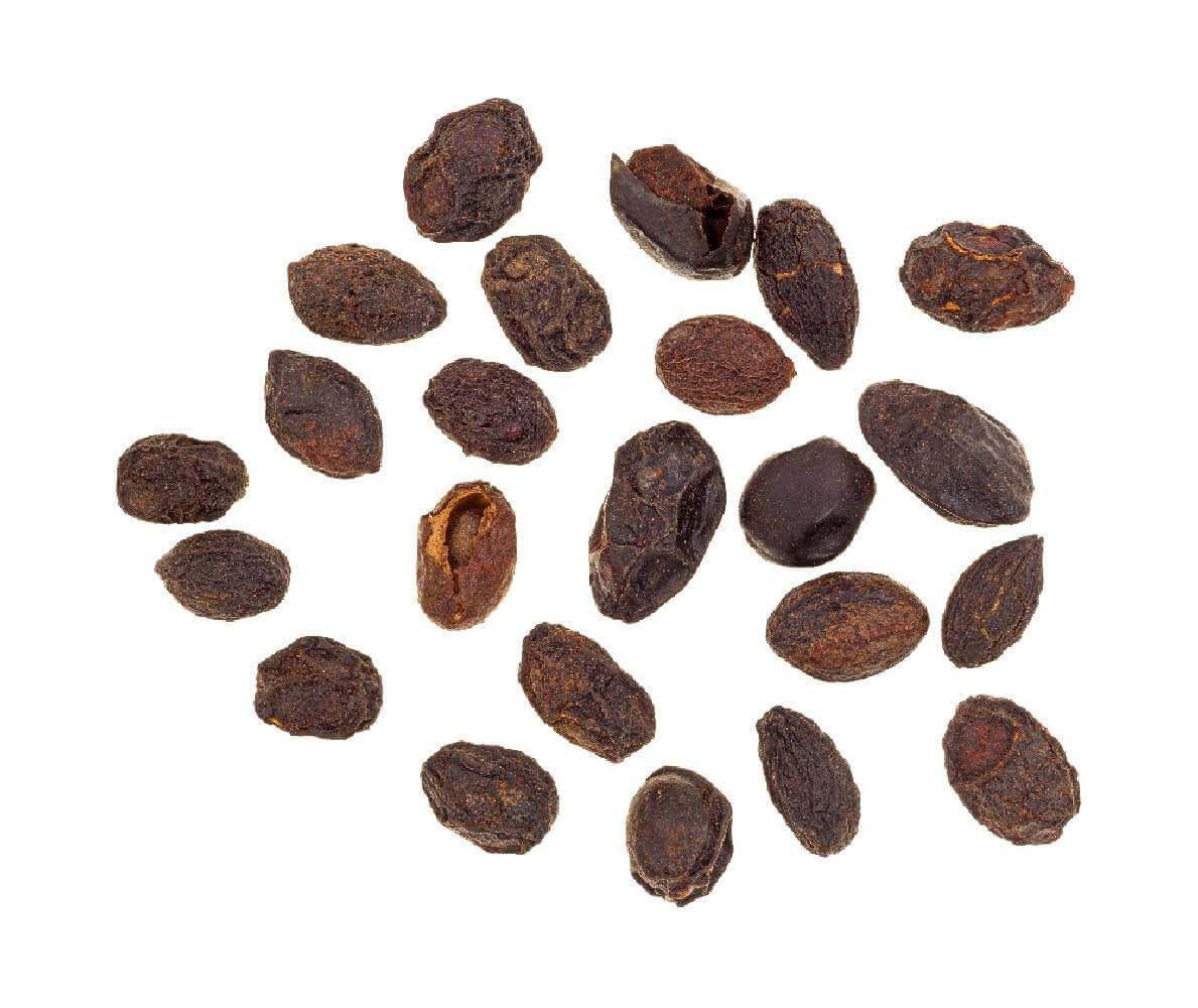 image de l'ingredient Palmier de Floride
