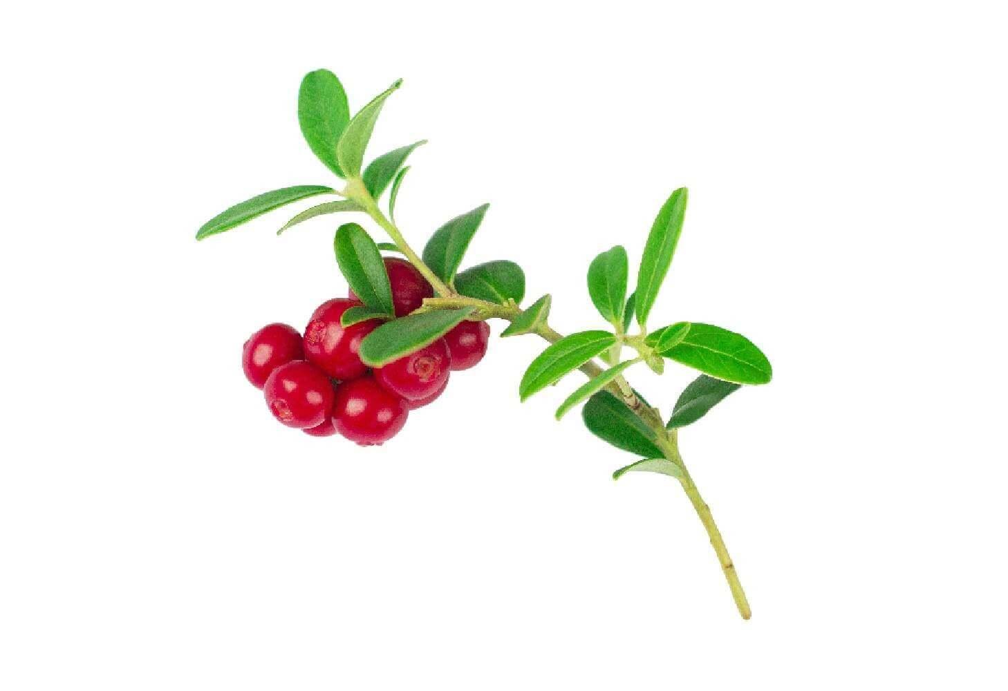image de l'ingredient Busserole