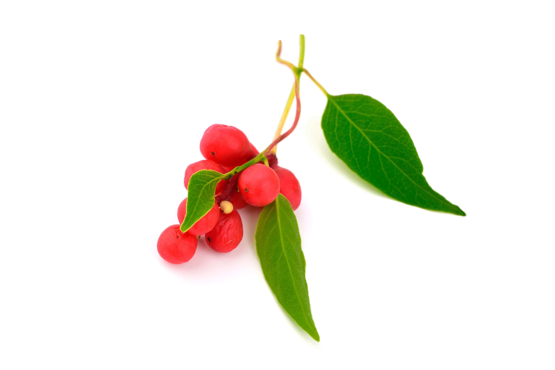 image de l'ingredient Schisandra